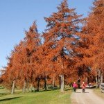 Salten Herbst