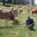 Bauer Toni auf der Alm bei unseren Kühen