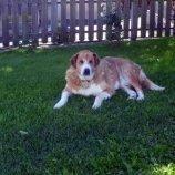Rex unser treuer Hofhund
