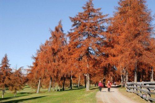 Salten-Herbst-